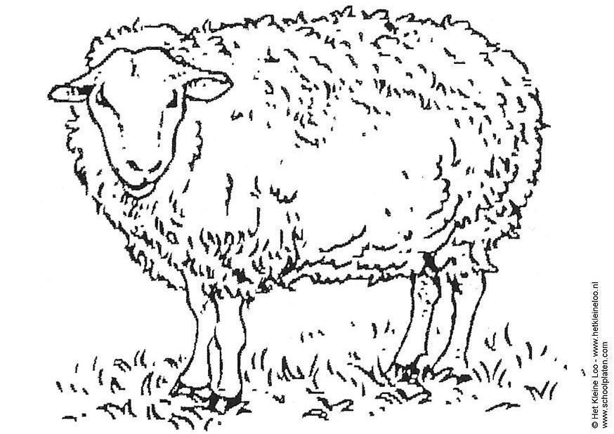 Dibujo para colorear Oveja - Img 3741
