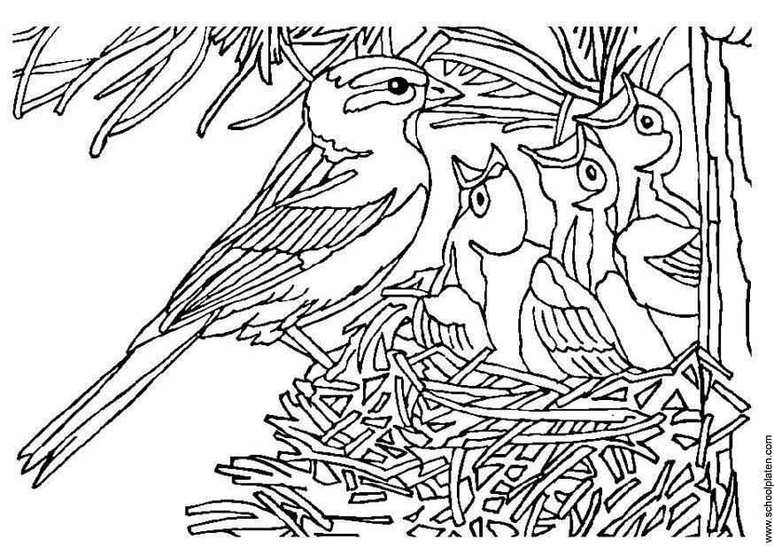 Vogeltje Kleurplaat Dibujo Para Colorear P 225 Jaro Con Nido Img 3405