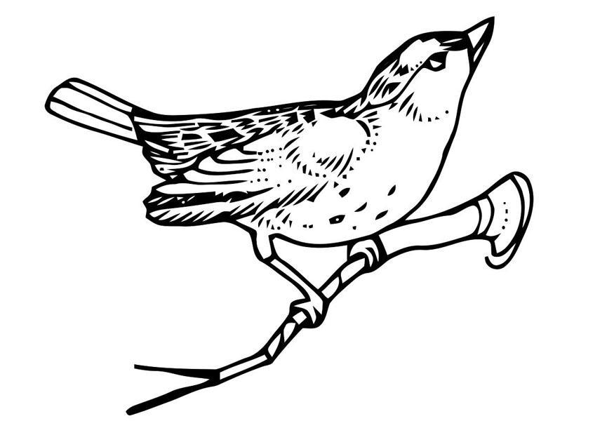 Dibujo para colorear pjaro sobre rama  Img 20705