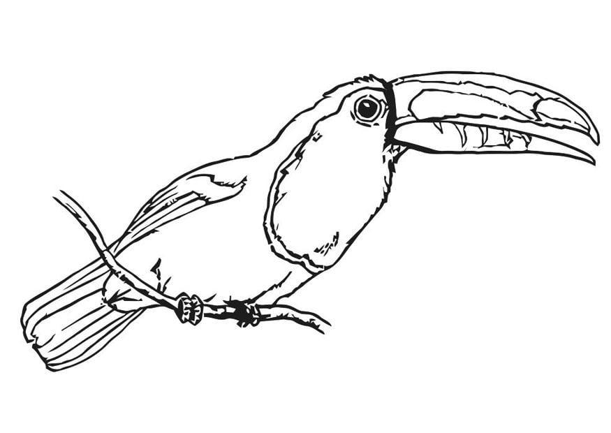 Dibujo para colorear pajaro - tucán - Img 20699