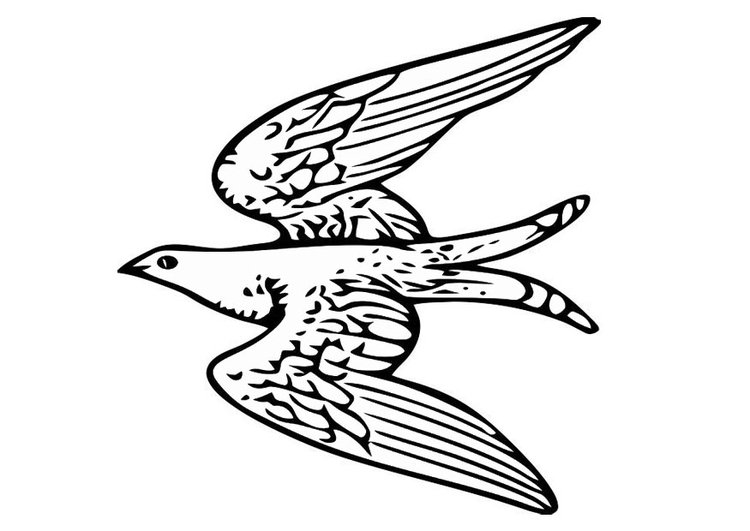 Dibujo para colorear pjaro volando  Img 20703