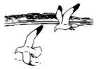 Dibujo para colorear pájaros - gaviota argéntea