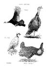 Dibujo para colorear Pájaros
