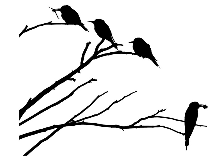 Vogeltje Kleurplaat Dibujo Para Colorear P 225 Jaros Sobre Una Rama Img 29677