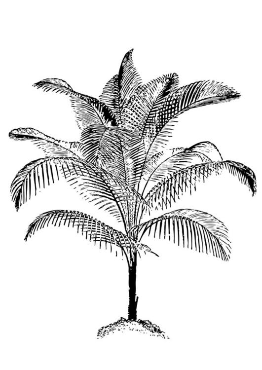 Dibujo Para Colorear Palmera Img 17401 Images