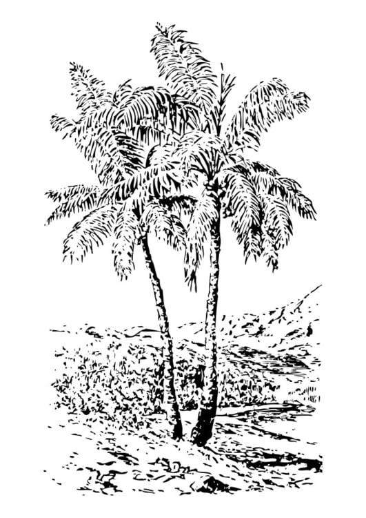 Dibujo para colorear palmera - Img 28363
