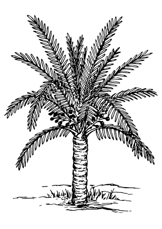 Dibujo para colorear palmera - Img 30138