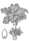 Dibujo para colorear palmera - palmera de betel con nuez de betel