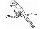 Dibujo para colorear Papagayo