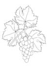 Dibujo para colorear Parra con uvas
