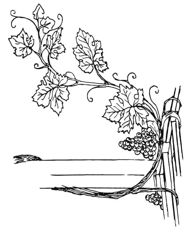 Dibujo Para Colorear Parra Img 15710 Images