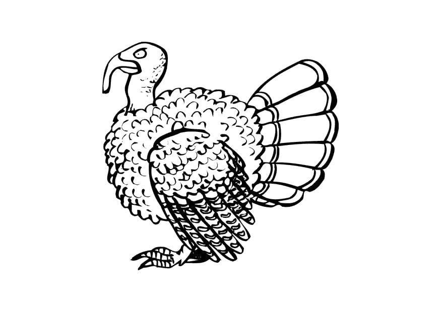 Dibujo para colorear Pavo - Img 16863