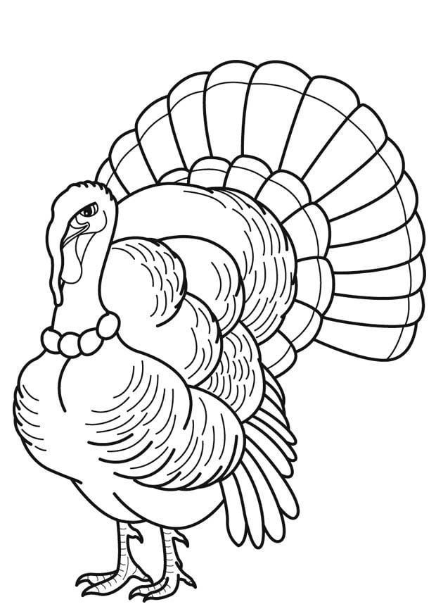 Dibujo para colorear Pavo - Img 16872