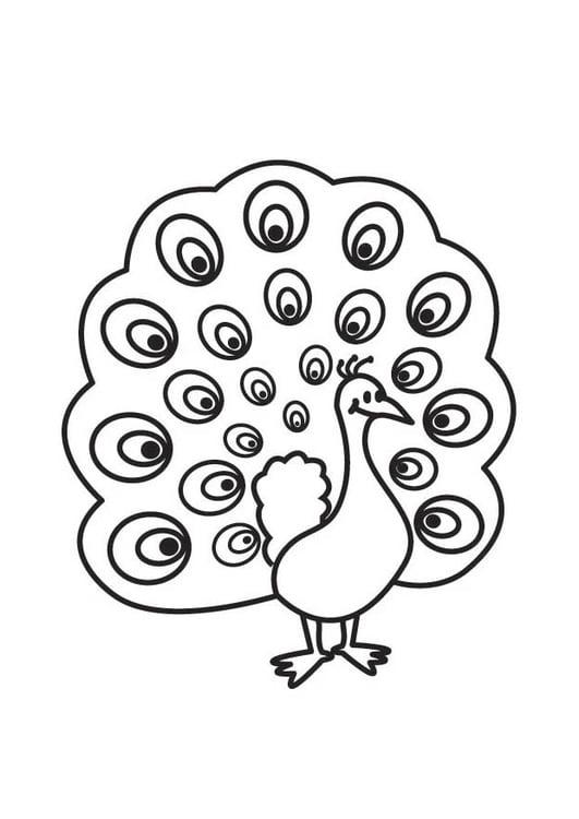 Dibujo para colorear pavo real - Img 17763