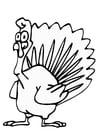 Dibujo para colorear pavo
