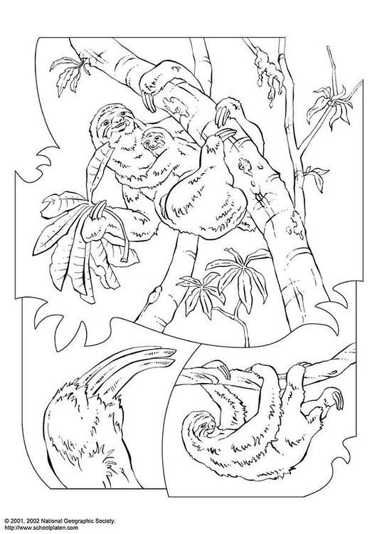 Dibujo para colorear Perezoso - Img 3068