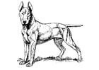 Dibujo para colorear perro - bull terrier