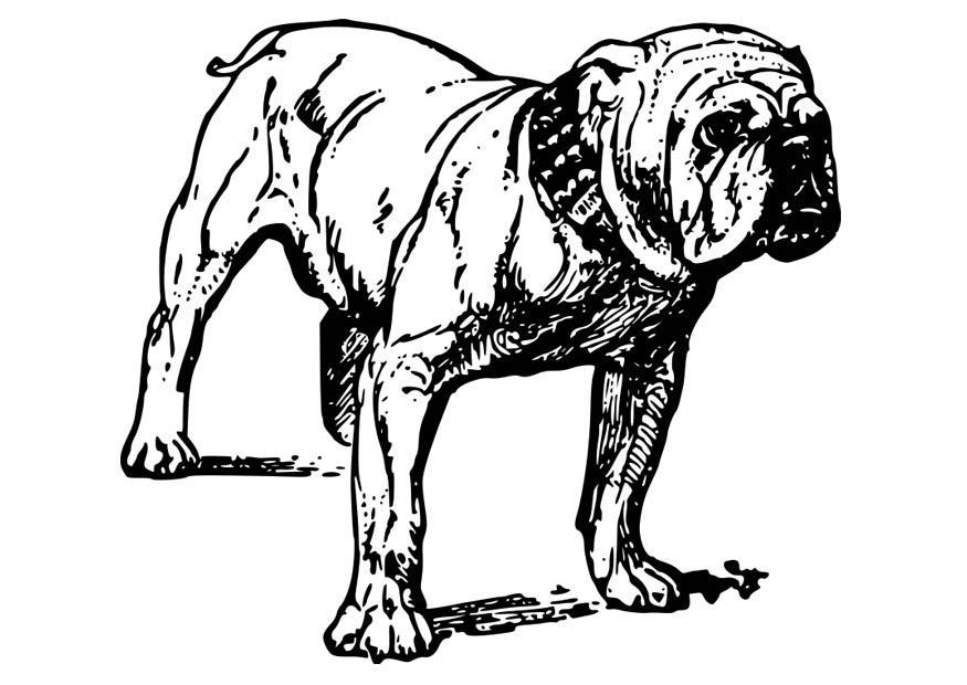 Increíble Páginas Para Colorear De Baby Bulldog Bandera - Dibujos ...