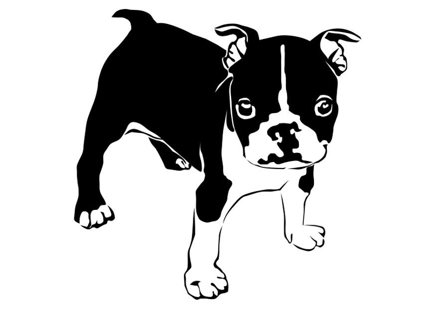 Dibujo para colorear perro bulldog franc s img 27821 for Cane disegno facile