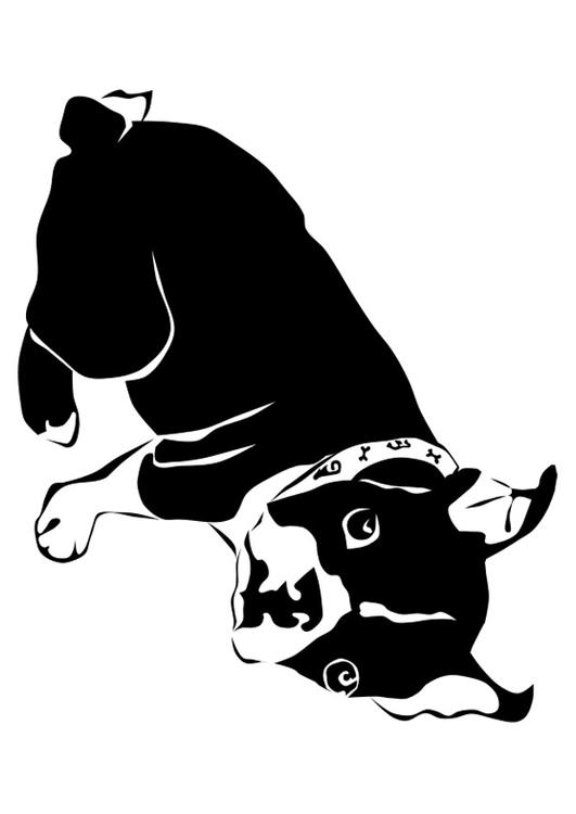 Dibujo Para Colorear Perro Bulldog Franc 233 S Img 27818