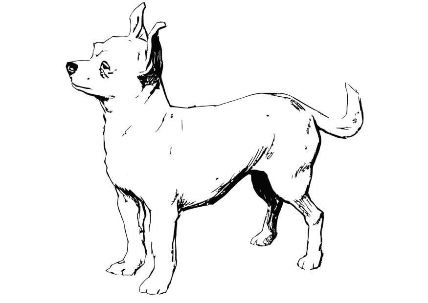 Dibujo De Chihuahua: Dibujo Para Colorear Perro