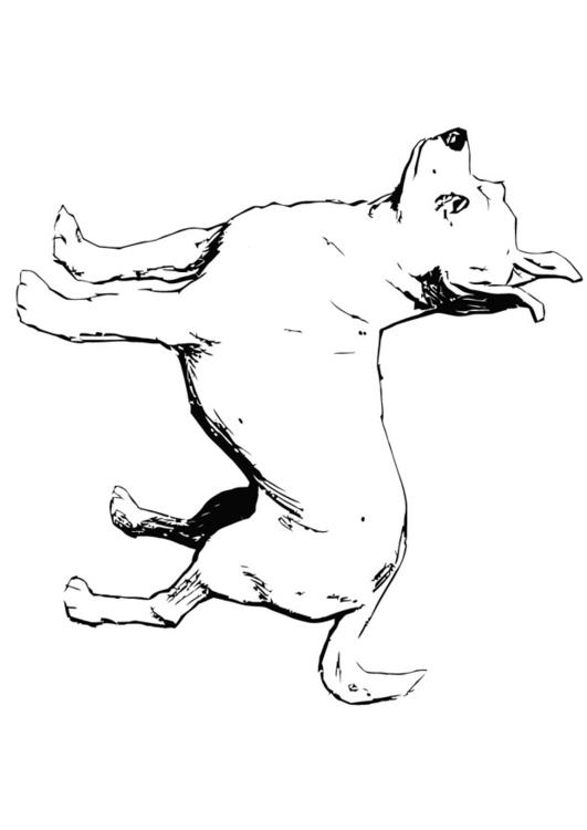 Dibujo Para Colorear Perro Chihuahua Img 13704