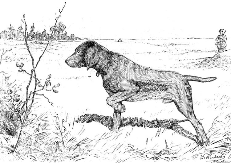 Dibujo para colorear Perro de caza - Img 9762
