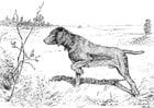 Dibujo para colorear Perro de caza