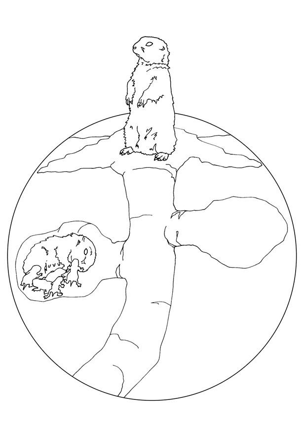 Dibujo para colorear Perro de la pradera con nido  Img 9474