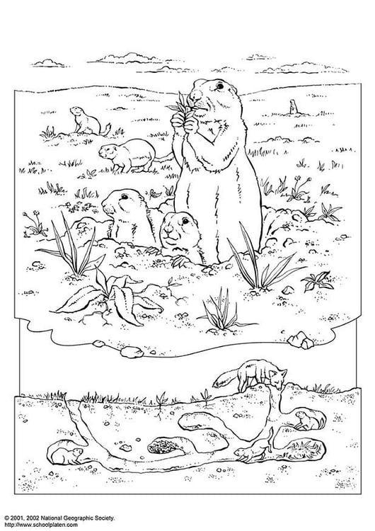 Dibujo para colorear Perro de la pradera  Img 3075