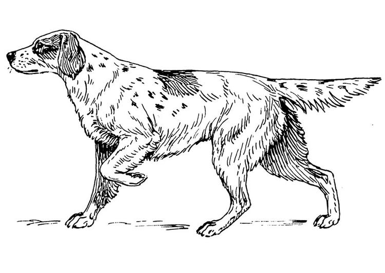 Dibujo Para Colorear Perro Setter Img 16652