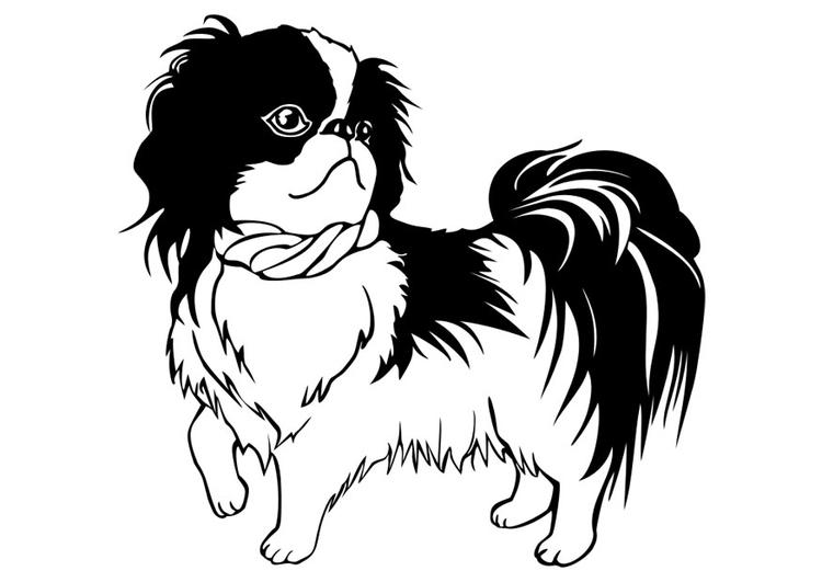 Dibujo para colorear perro- Shih Tzu - Img 29834