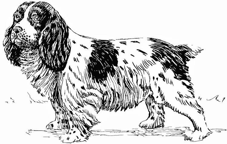 Dibujo Para Colorear Perro Spaniel Img 15752 Images
