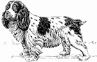 Dibujo para colorear Perro - Spaniel