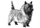 Dibujo para colorear perro - terrier