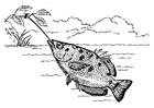 Dibujo para colorear pez arquero
