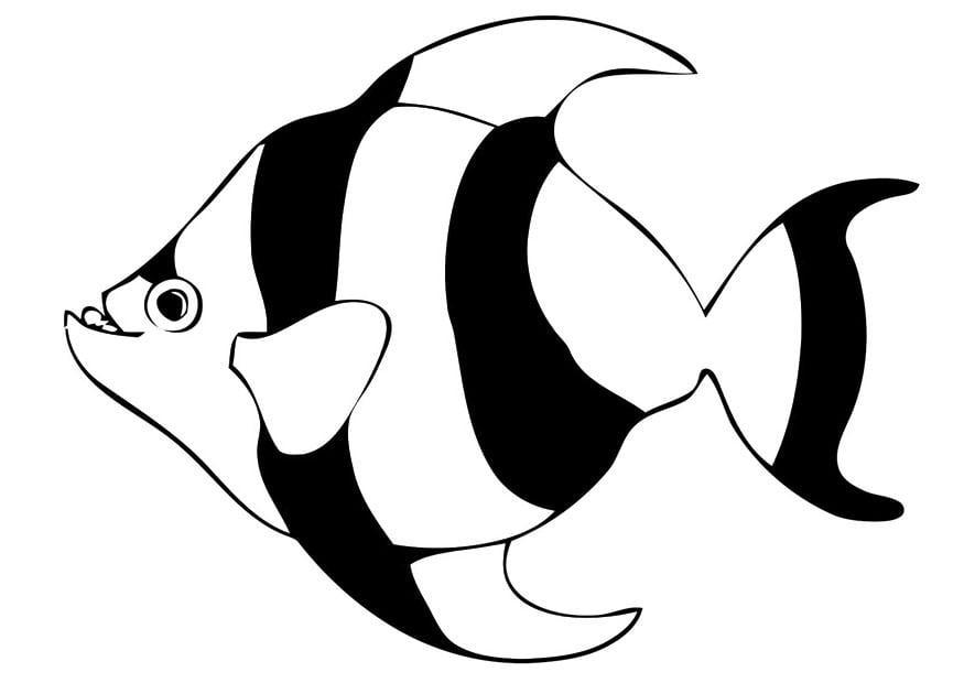 Dibujo para colorear pez - Img 20681