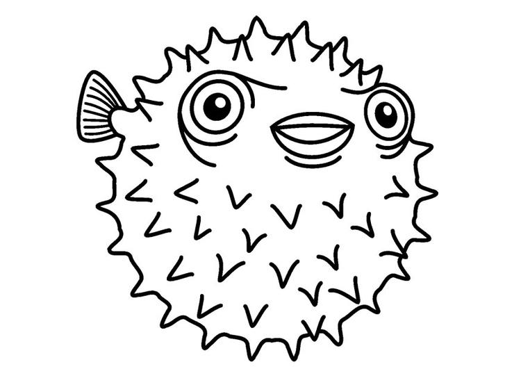 Dibujo para colorear pez erizo - Img 23083