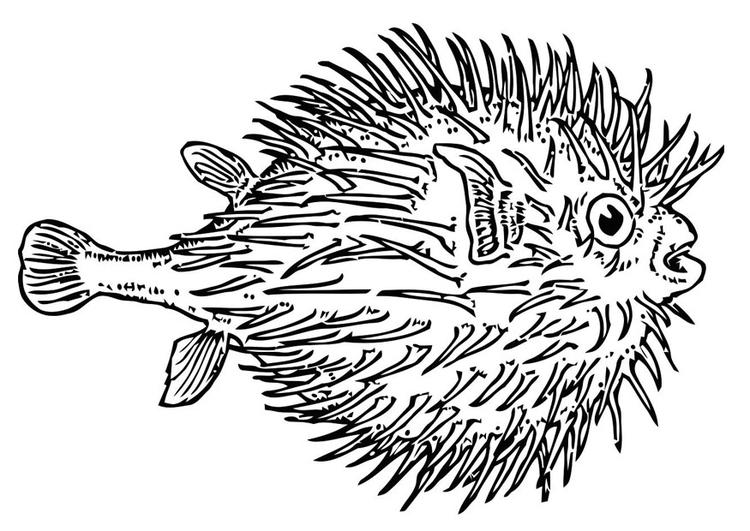 Dibujo para colorear pez - pez globo - Img 19623