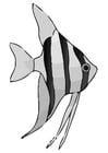 Dibujo para colorear pez