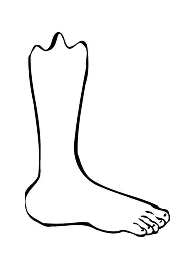 Dibujo para colorear pierna/pie - Img 9521