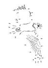 Dibujo para colorear Pigargo americano