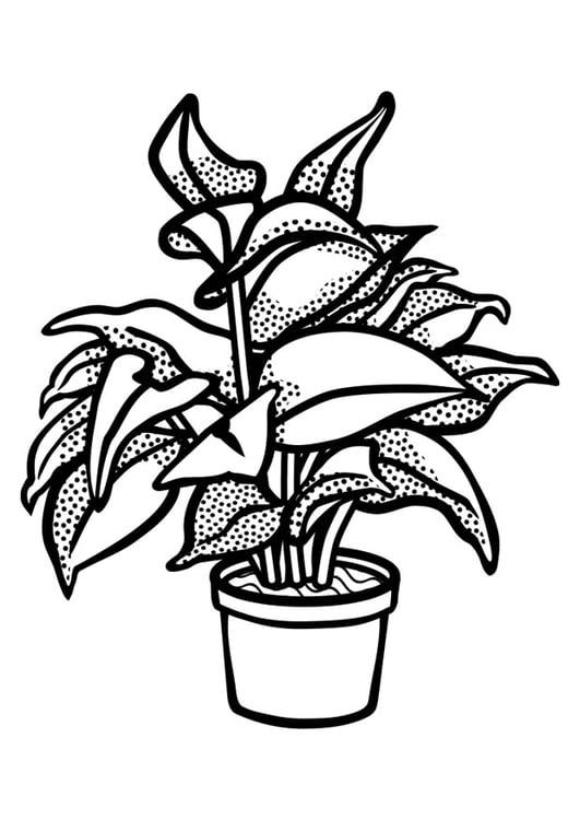 Dibujo para colorear planta de interior img 29843 for Plantas ornamentales para colorear