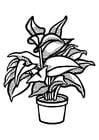 Dibujo para colorear planta de interior