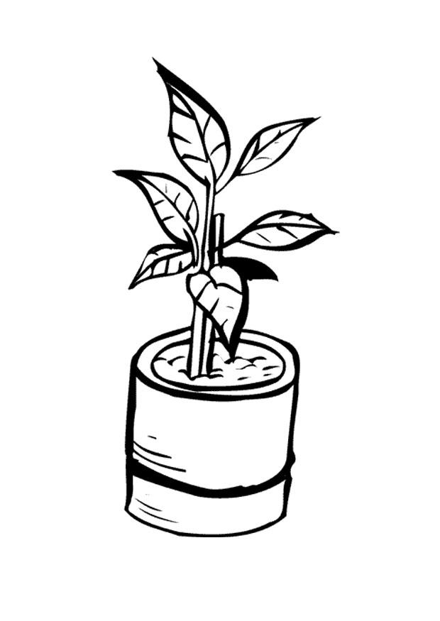 Dibujo para colorear planta de tiesto img 9647 for Plantas ornamentales para colorear