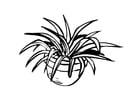 Dibujo para colorear Planta de tiesto