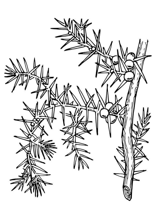 Dibujo para colorear planta img 27388 for Plantas ornamentales para colorear