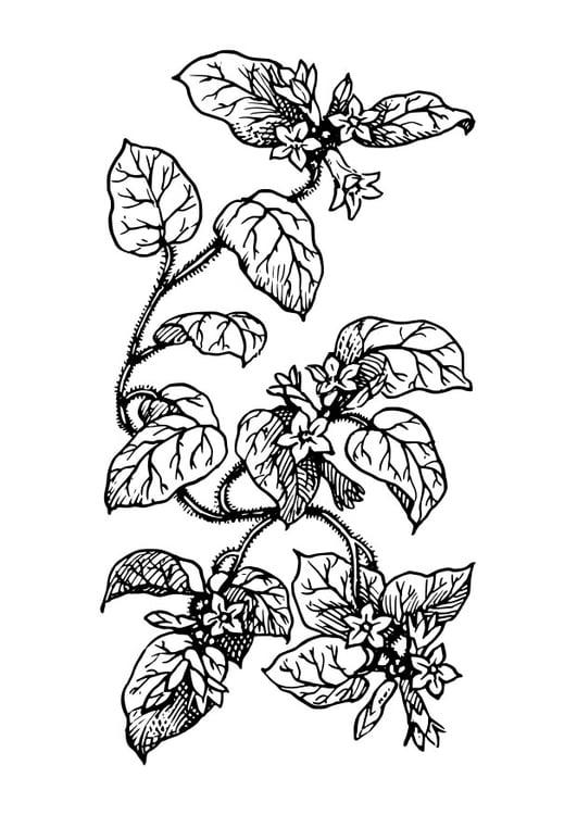 Dibujo Para Colorear Planta Img 27411