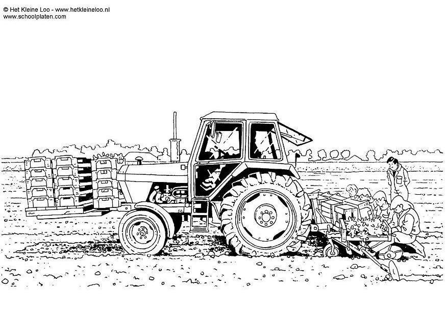 Dibujo para colorear Plantar patatas - Img 3739
