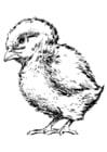 Dibujo para colorear Pollito